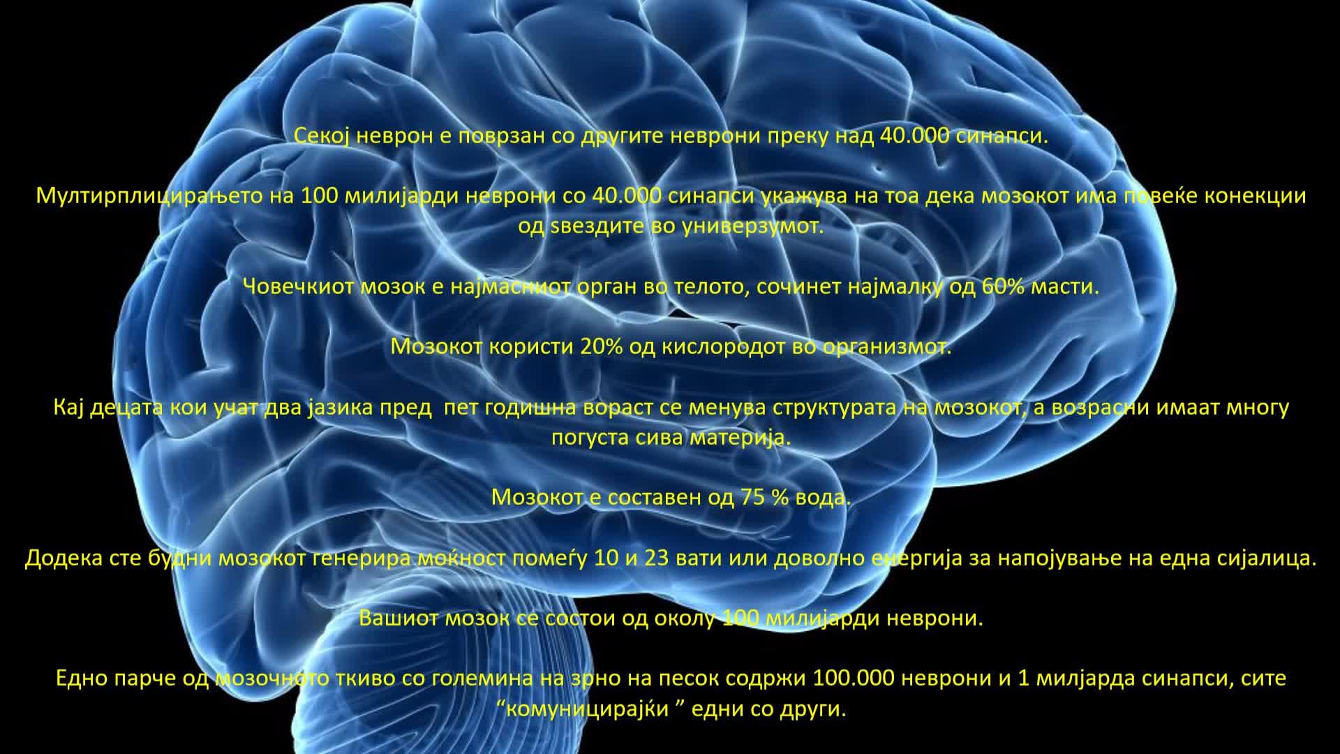 Interesni fakti koi ne ste gi znaele za mozokot