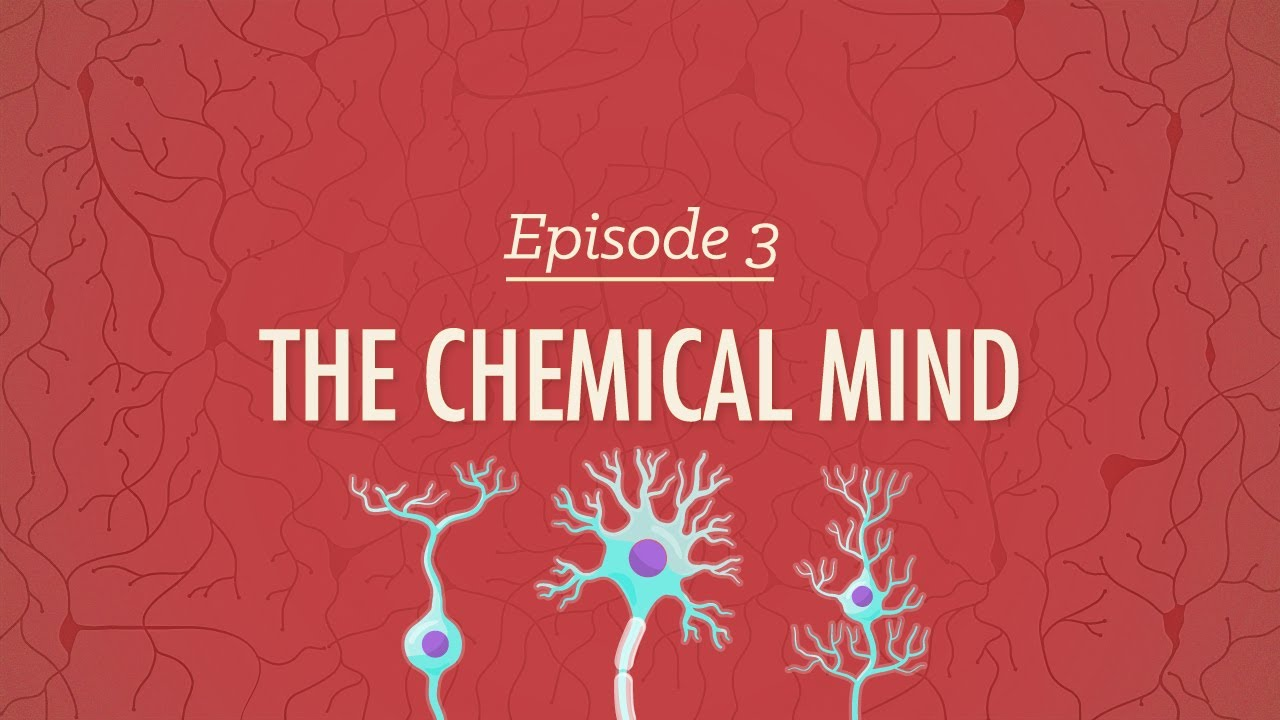 The Chemical Mind: Crash Course Psychology #3
