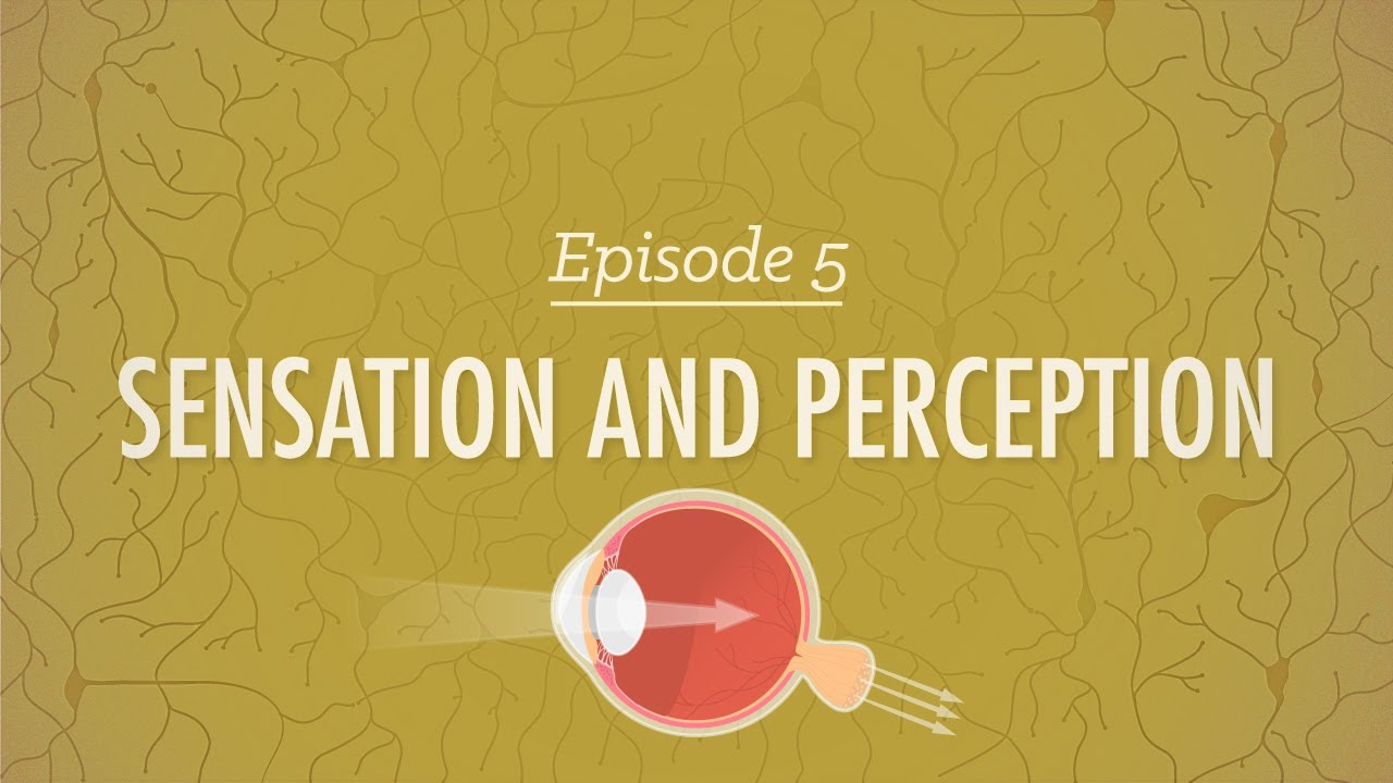 Sensation and Perception: Crash Course Psychology #5