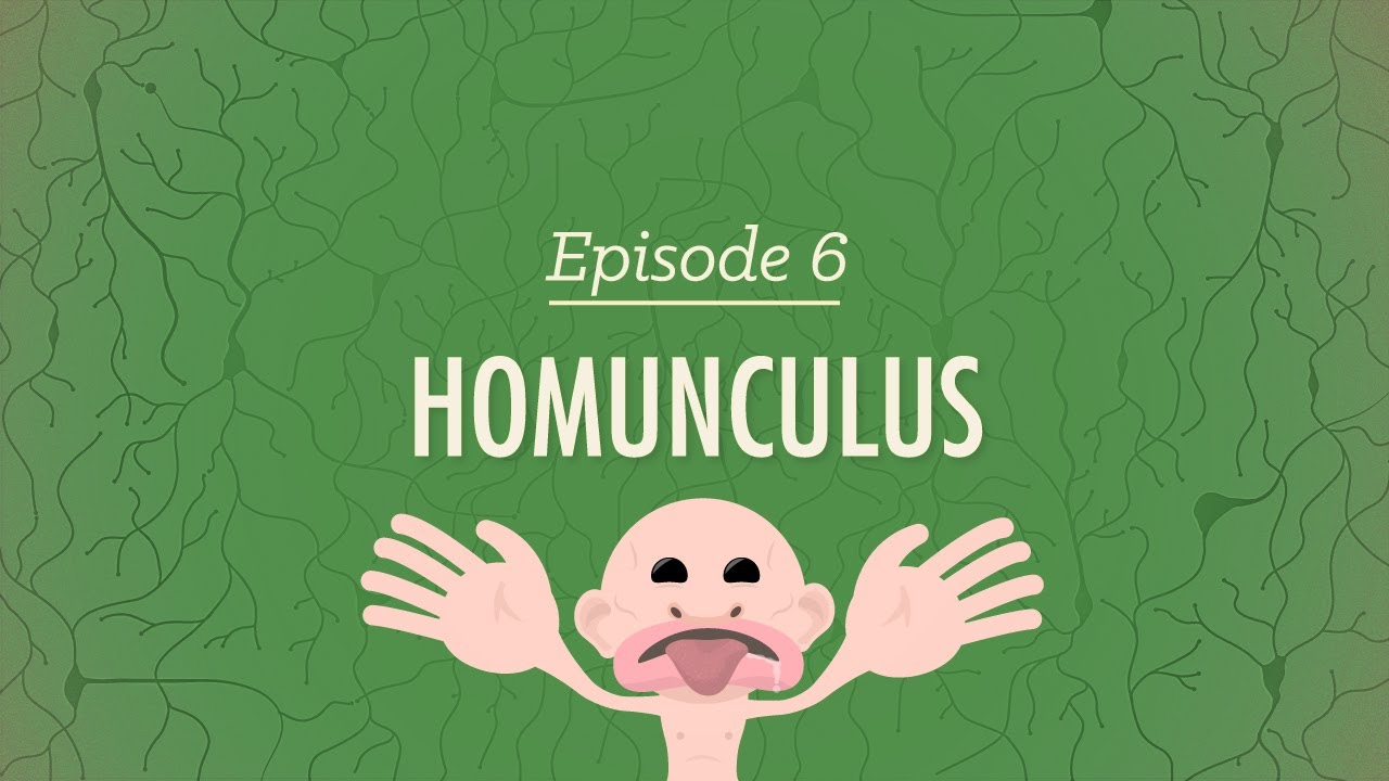 Homunculus: Crash Course Psychology #6