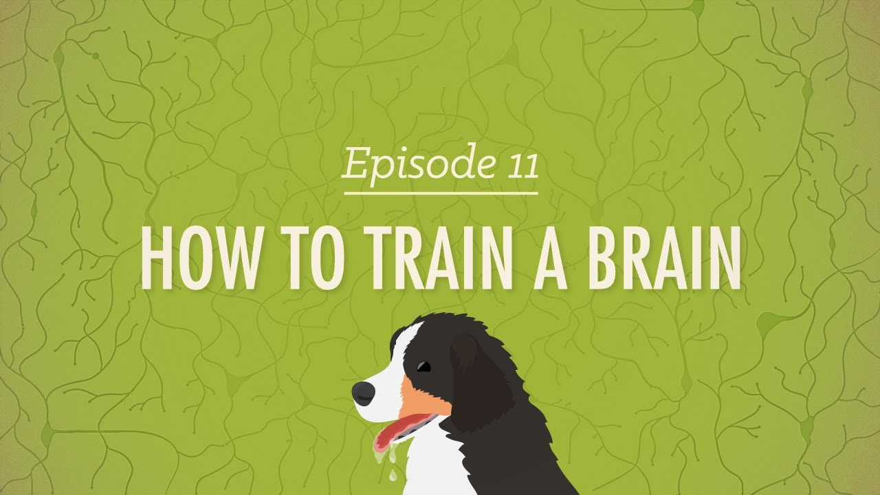 How to Train a Brain: Crash Course Psychology #11
