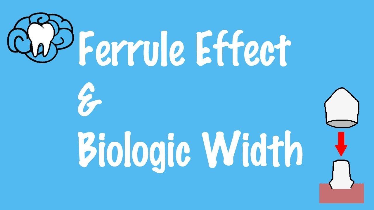 Ferrule Effect and Biologic Width