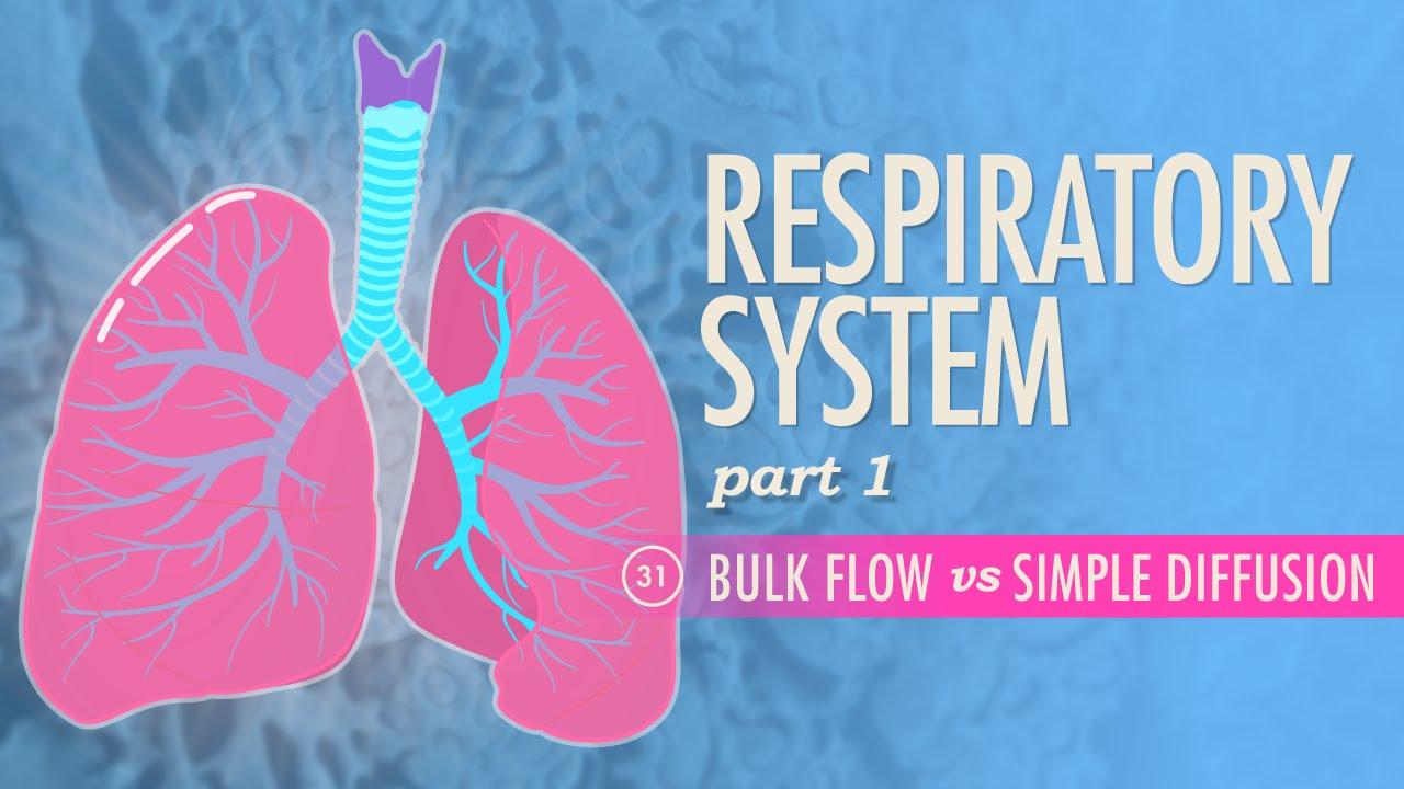 Respiratory System, Part 1: Crash Course A&P #31