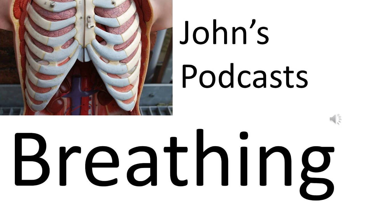Respiratory System 5, Podcast on breathing