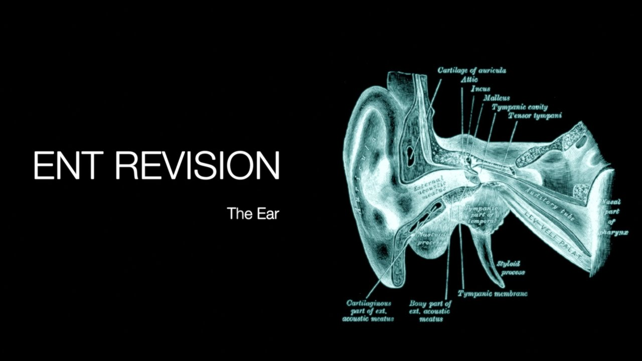 ENT Revision - The Ear