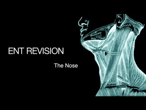 ENT Revision - The Nose