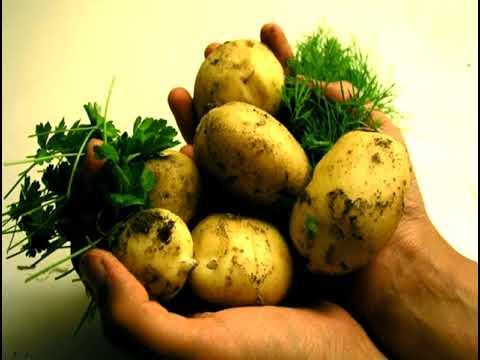19  Vegeterijanstvo 2