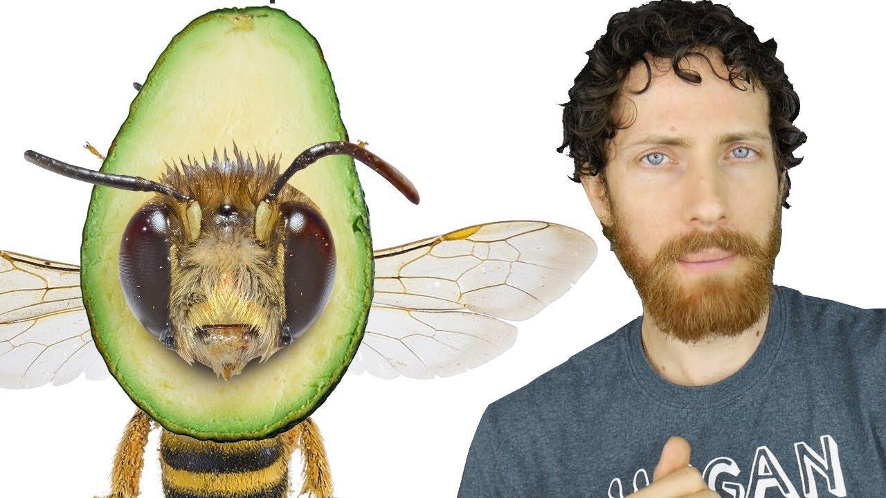 Avocados Aren't Vegan Now?