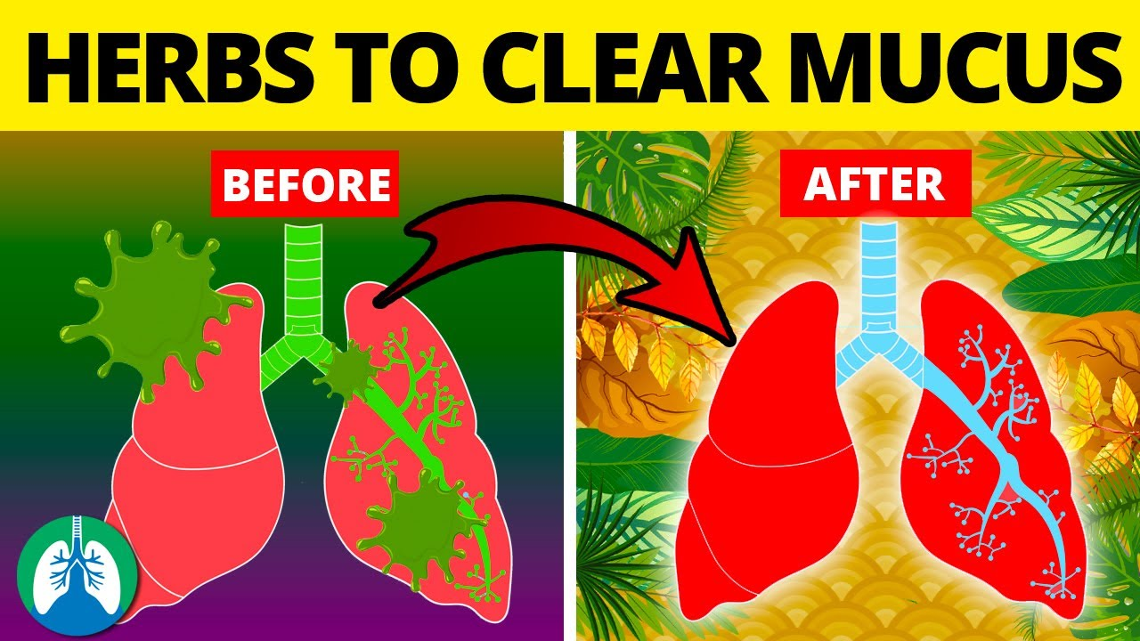 5 Herbs for Lung Health, Clearing Mucus, COPD, and Killing Viruses
